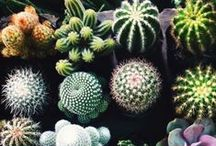 Cactus & Succulent love. / Exploring the world of succulents and cactus plants in interiors.  So easy to keep, and need so little maintenance and watering.  The perfect plant for me ;)