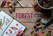 Forest Collection / Designs inspired by woodland and trees.