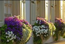 Veranda & Patio / Enjoy Outdoor living / by Nancy Mamchur @ La Rouge Interiors