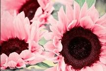 çiçek desenleri / by Melike Dursun