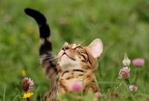 Cats / by Melissa Goldsmith