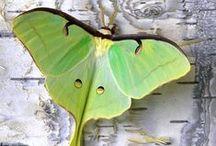 Moths & Other Lovelies