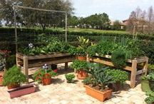 Allotment Design / Ideas for laying out your allotment, design, and how it should look. Includes raised beds and planting styles/methods