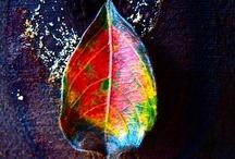 Fall Ya'll / by Amanda Harwood