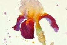 Iris / by Amanda Harwood