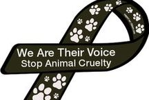 STOP ANIMAL ABUSE / Cruelty to animal is a crime / by Edeliz Bering
