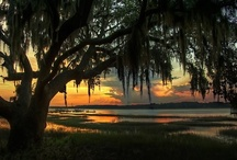 The Southern Life / by Ashley Pullen