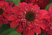 [ Gardening ] Blooms & Blossoms / All the beautiful flowering plants / by Jennifer Walker