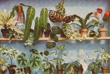 [ Gardening ] Indoor Plants / Growing house plants in style and indoor gardening advice / by Jennifer Walker