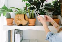 for indoor plants and blooms / Seeking inspiration for flowers and houseplants in the home