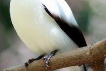 birds / simpatici amici a quattro zampe