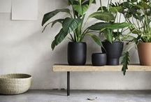 House plants cool