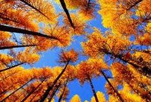 Fall/Autumn / Seasonal fun and inspirations from Jonathan Paul Eyewear™!