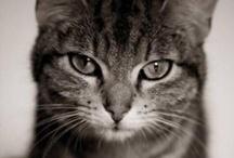 Cats et cetera