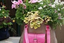 container gardening / by maryjane Paniza