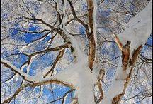 Winter Wonderland / by Susan Richter