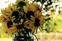 Flowers / I love bouquets from fresh flowers ♥