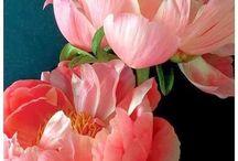 Gardening/Gorgeous blossoms / by Barbara Goldenberg
