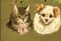 CATS AND DOGGIES / by Janet Fricks