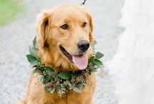 Wedding Dogs / by FIDO Friendly