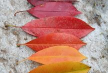 Preschool Crafts - Autumn