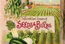 Vintage Seed Catalogs and Packets