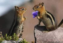 Animals I Love*