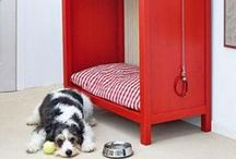 Accesorios para mascotas / Algunas de nuestras recomendaciones sobre artículos y cuidados para tu mascota