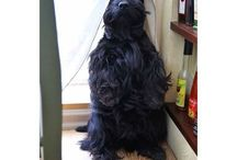 Luv Scotties...so funny! / My Scotties....sunshine on a cloudy day! / by Jeanne Scottie mom