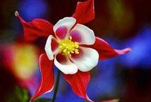 Gardening Inspirations... / by Missy G.