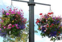 hanging baskets / by Jeanne Scottie mom