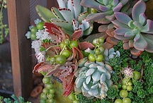 gardening / by Karen Wisdom