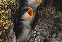Birds... / by Missy G.