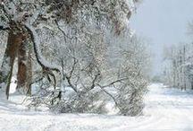 Winter's Beauty! / by Missy G.