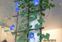 flowering vines / by Jeanne Scottie mom