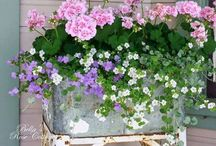 potted plants/containers / by Jeanne Scottie mom