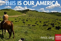 This Is Our America / For generations, we've understood that with a little hard work, nothing was beyond our grasp. It's time we had a government that worked with us, and not against us.   We are the National Republican Congressional Committee, and our mission is to make sure Congress spends and taxes less, so the economy can get back on track.  If you're ready for a comeback, if this is your America, then fight for it: ouramerica.nrcc.org / by The NRCC