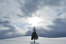 Winter / by Gypsy