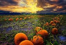 Autumn / by Gypsy