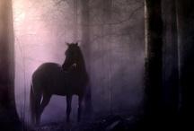 Horses / by Gypsy