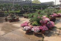 Stutzmans Garden Center in Salina During Summer / Some of our summer loving plants