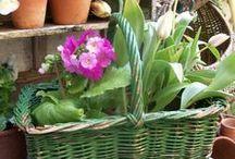 Gardening /      / by Jeanne Scottie mom