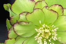 Shade loving plants/flowers / by Jeanne Scottie mom