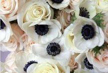 Flowers / by Boriana Mihailovska