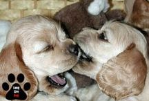 Puppy's Breath / Tips and solutions for your furry friend's oral health / by TheraBreath