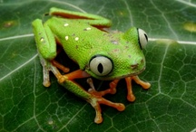 Photos of Peru / Stunning photos of Peru, from pictures of frogs to satellite images.