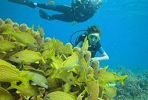 Barbados: Let's Dive!