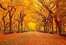 fall :) / by Janise W.