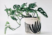 Plants / Indoor plants and flowers