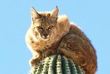 CATS/Feline / cats felines  / by Wesley